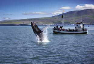 Husavik Original Whale Watching